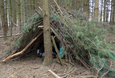 woodland-shelter